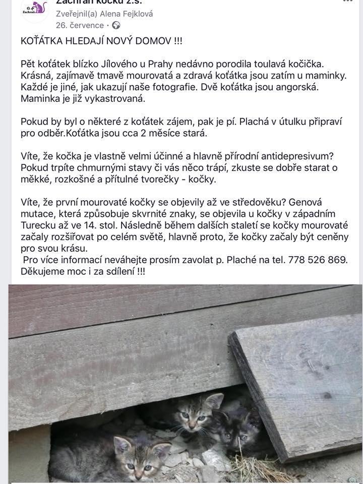 Kostnatá kočička