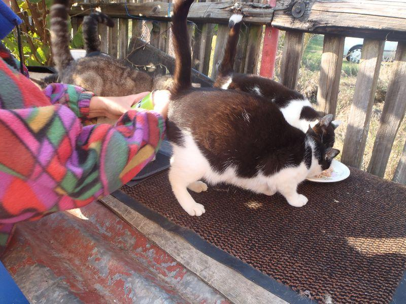 mladá a něžná kočička