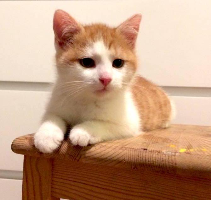 Pěkně kočička obrázky