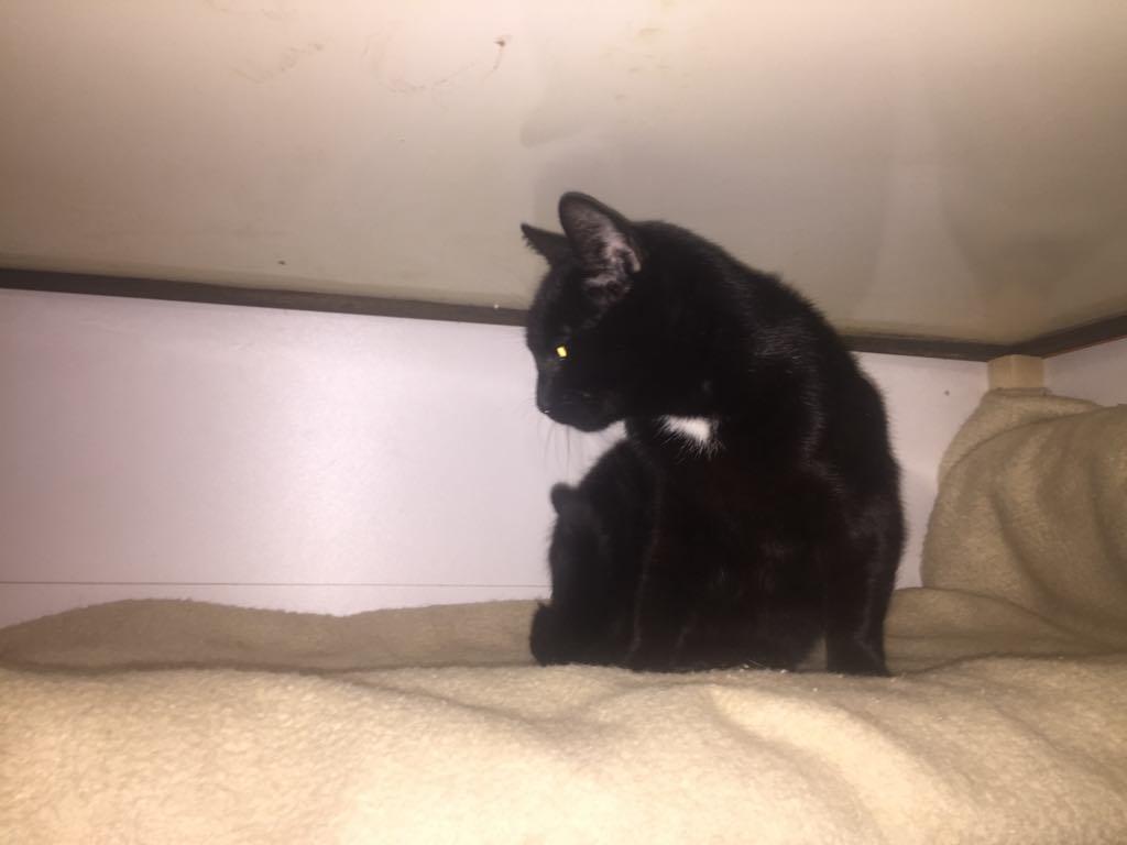 Do 18 černé kočička