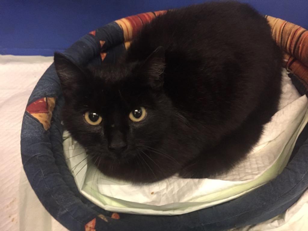 Nová černá kočička pic